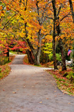 Winding Country Road In Autumn Posters by  krisrobin