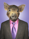 Piglet Dressed Business Man Photo by  Nosnibor137