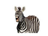 Zebra Laugh Or Shout Prints by Four Oaks