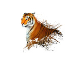 Tiger Splash Print by  MATTIAMARTY