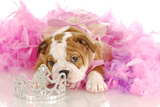 Spoiled Dog - English Bulldog Puppy Chewing On Tiara Surrounded By Pink Feathers Posters by Willee Cole