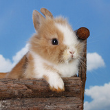 Rabbit Baby Bunny Outdoor Photo by Richard Peterson
