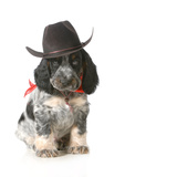 Country Dog - English Cocker Spaniel Puppy Wearing Western Hat Isolated On White Background Fotografisk tryk af Willee Cole