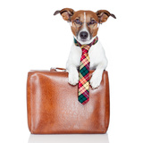 Dog With Leather Bag Photographic Print by Javier Brosch