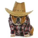 Country Dog - English Bulldog Puppy Dressed Up In Western Clothes And Hat On White Background Fotografisk tryk af Willee Cole