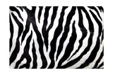 Zebra Skin Background Prints by val lawless