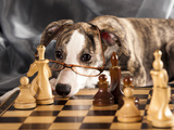 Puppy To Play Chess Photographic Print by  Lilun