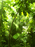 Tropical Forest, Trees In Sunlight And Rain Prints by  odmeyer