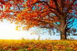 Big Autumn Oak With Red Leaves On A Blue Sky Background Prints by Dudarev Mikhail