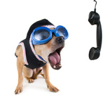 A Cute Chihuahua On The Phone Prints by  graphicphoto