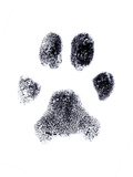 Dog Fingerprint Prints by  zothen