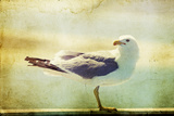 Vintage Photo Of A Seagull-Artistic Retro Styled Picture Poster by  melis