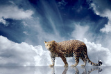 Predator Stay On The Sky Background Photographic Print by  yuran-78