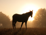 Silhouette Of An Arabian Horse Against Sunrise In Heavy Fog, In Rich Sepia Tone Prints by Sari ONeal