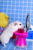 Hamster In The Bathroom Posters by  teresaterra