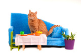 Cat Is Going To Have A Dinner Sitting On Sofa Poster by  vitalytitov