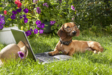 Clever Dog Dachshund In Glasses And Laptop Computer Posters by  Lilun