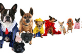 A Spoof On Business Images But With Dogs Photo by  graphicphoto