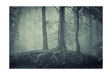 Scary Trees With Roots In A Dark Forest Posters by  ando6