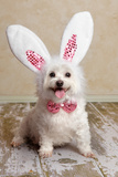 Puppy Dog Wearing Bunny Rabbit Ears Costume Poster by  lovleah