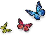Green Pink And Blue Butterflies Isolated On White With Soft Shadow Beneath Each Photographic Print by Ambient Ideas