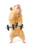 Hamster With Bar Isolated On White Reprodukcja zdjęcia autor IgorKovalchuk