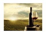 stokkete - Vineyard At Sunset Obrazy