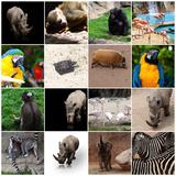 Various Wild Animals Composition Fotoprint van Aaron Amat