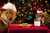 Cat And Dog Taking Over Santa'S Cookies And Milk Photographic Print by  websubstance