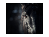 Horse Eye In Dark Prints by  mari_art