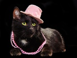 Glamorous Black Cat Wearing Pink Hat And Beads Against Black Background Print by  vitalytitov