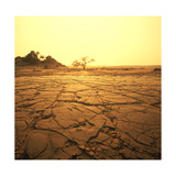 Dry Landscape Prints by Andrushko Galyna