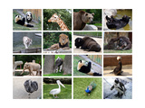 Animals Collage Print by  miff32