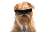 Dog With Sunglasses And A Tie Photographic Print by  Okssi