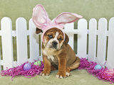 Funny Easter Bulldog Posters by  JStaley401