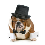 Funny Dog - Grumpy Looking Bulldog Dressed Up In A Tophat And Black Tie Poster by Willee Cole