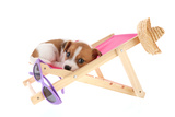 Little Cute Beach Puppy Resting In Chair Photographic Print by  Ivonnewierink