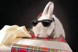 Curious Rabbit In Sun Glasses Climbing Up Gift Box Over Dark Background Prints by  PH.OK