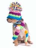 Blind (Can'T See), Closed Eyes Concept. Dressed Chihuahua Puppy With Hat Pulled Over Eyes Posters by  vitalytitov