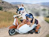 Two Chihuahuas In A Scooter Reprodukcja zdjęcia autor graphicphoto