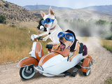 Two Chihuahuas In A Scooter Print by  graphicphoto