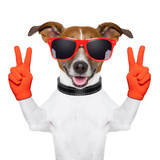 Peace And Victory Fingers Dog Fotografisk tryk af Javier Brosch