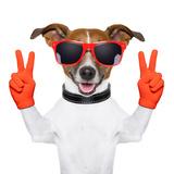 Peace And Victory Fingers Dog Reprodukcja zdjęcia autor Javier Brosch