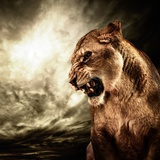 Roaring Lioness Against Stormy Sky Photographic Print by NejroN Photo