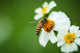Flower Blossom And Bee Photographic Print by  prajit48