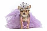 Royal Dog With Crown Isolated Reprodukcja zdjęcia autor vitalytitov