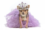 Royal Dog With Crown Isolated Posters by  vitalytitov
