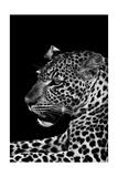 Leopard Kunst von  Donvanstaden