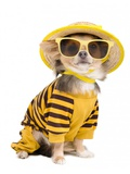 Chihuahua Dressed With T-Shirt, Straw Hat And Sun Glasses Posters by  vitalytitov