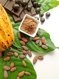 Cocoa Pod With Cocoa Beans, Powder, And Chocolates Photographic Print by  vd808bs